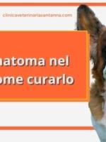 Otoematoma nel cane e gatto: cos'è e come si cura