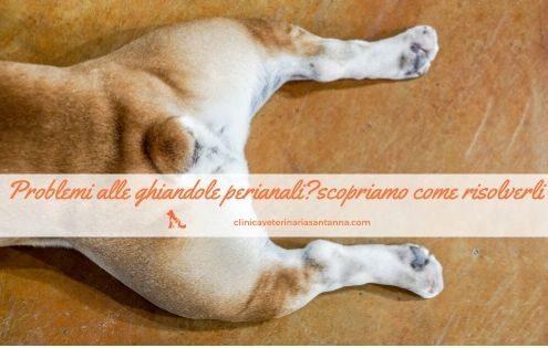 ghiandole perianali cane