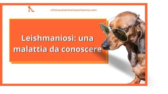 Leishmaniosi nel cane: sintomi, diagnosi e cura
