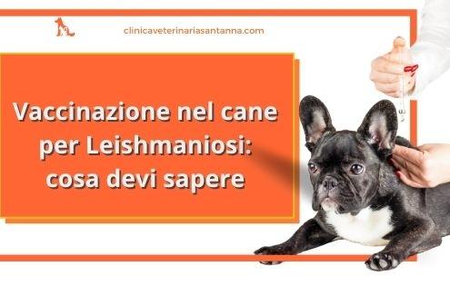 vaccino leishmaniosi cane